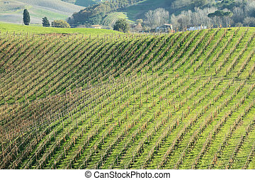 landscape with vineyards pattern seen from a hill, Tuscany,...