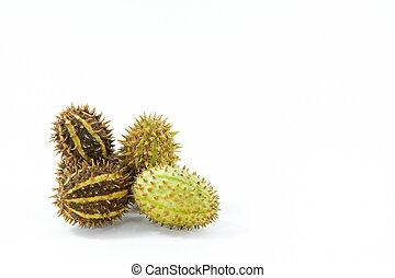 Prickly - Close view of four prickly fruits with copyspace