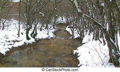 Stream in the winter forest.