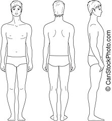 Male figure - Vector illustration of male figure. Front,...