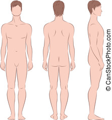 Man figure - Vector illustration of male figure Front, back,...