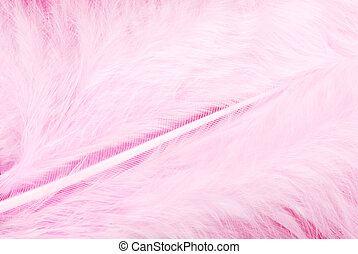 羽毛, 鳥類羽毛, 粉紅色, 結構