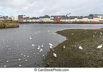 Claddagh - The Claddagh, the River Corrib meets  Galway bay