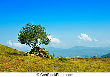 Single olive tree - Landscape with single olive tree and...