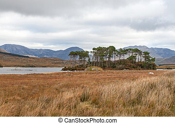 connemara - The wild nature of Connemara, the west of...