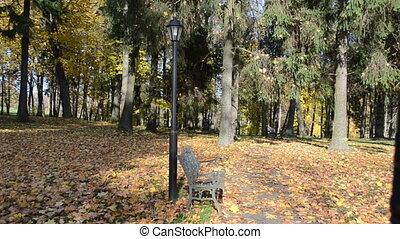 autumn girl bench autumn