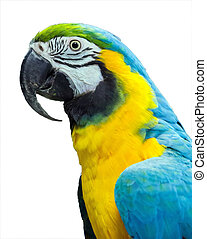 parrot blue yellow on white background