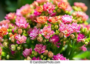 flower in pot floral - rose flower in pot floral