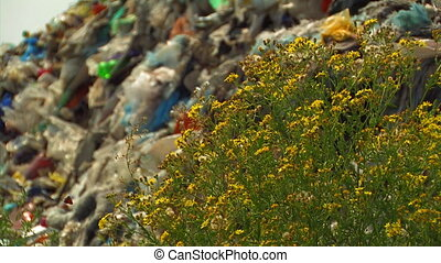 Garbage and flora.
