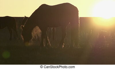 Evening pasture - Grazing horse backlit setting sun. Slow...
