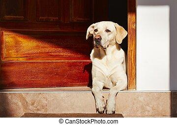 Dog is waiting in door of house.