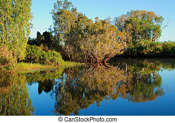 Trees with reflections