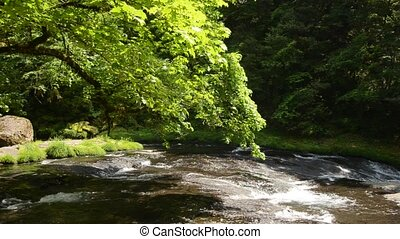 River and green painted maple - Flow of river and green...