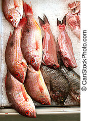 Red Snapper On Ice - Group of red snapper fish on ice in...
