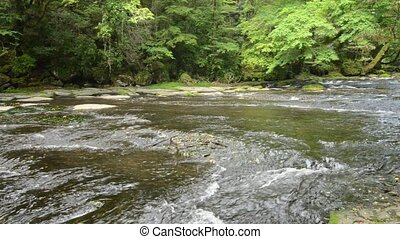 Gentle river - Flow of gentle river and fresh green forest