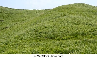 Green hills blowing in the wind in early summer