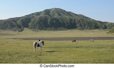 Horses on green field in front of mountain