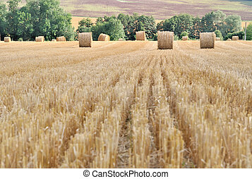 straw bales harvested in a field