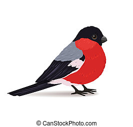 Winter bullfinch bird isolated vector illustration
