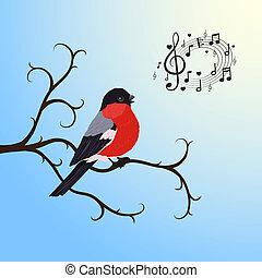 sjungande, DOMHERRE, fågel, träd, filial