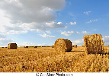 straw bales  harvested in fields under blue sky with clouds