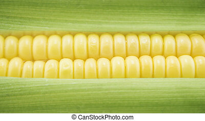 Corn - corn cob between green leaves .