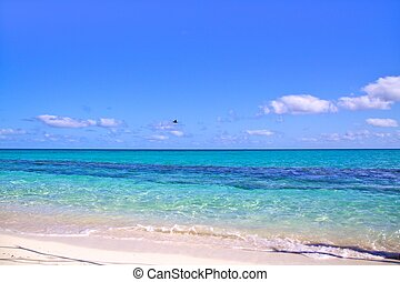 Beach with amazingly clear water, Heron Island Australia