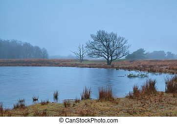 tree by little lake in misty autumn morning, Friesland,...