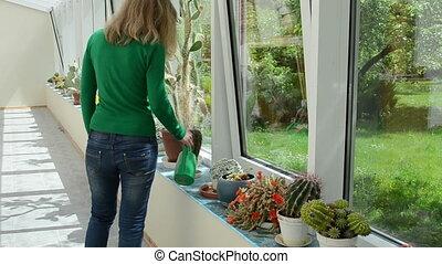 cactus watering girl - Various cactus plants grow in...