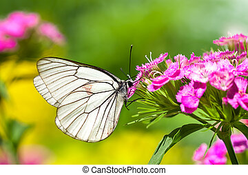 butterfly sits on flowers