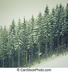 winter snowfall landscape with fir trees on mountain slope