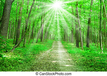 summer nature path in green forest with sunlight