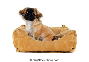 Puppy in dog bed - A sweet puppy is resting in a dog bed....