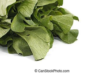 Mustard greens vegetable over white