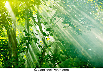 fairy forest - mist sunbeams through trees in fairy forest