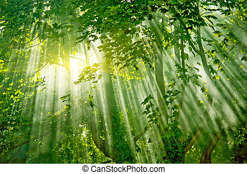 magic sunlights in forest - magic sunlight in fresh misty...
