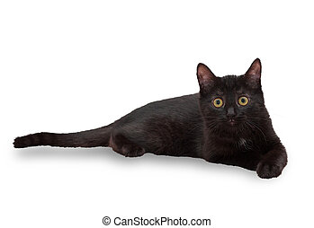 Black little kitten lying and looking fearfully isolated on...