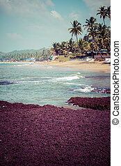 Exiting Anjuna beach panorama on low tide with white wet...