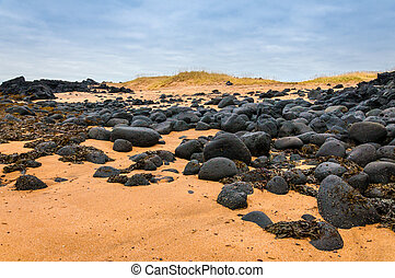 Sand beach with black voulcanic rocks in Iceland near Budir...