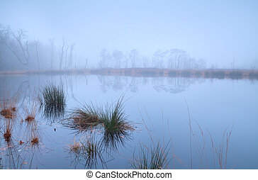 lake in forest covered with dense fog