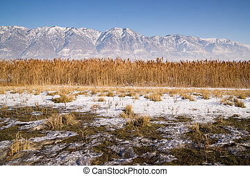 Snow Covered Mountains Behind Lakeside Highway PLant Growth...