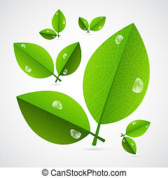 Abstract Vector Green Leaves Isolated on White Background