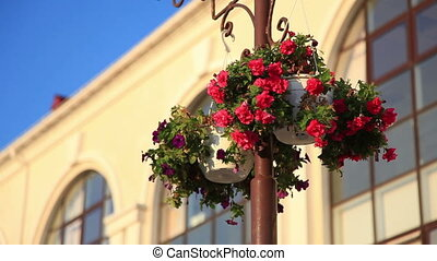 Basket of flowers. - Basket of flowers hanging on the pole.