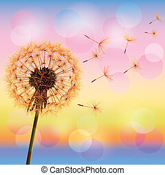 Dandelion on background of sunset - Flower dandelion on...