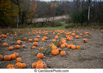 Farm Pumpkin Patch - Farm Field Pumpkin Patch