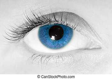 Female blue eye close-up - Female beauty, blue eye close-up...