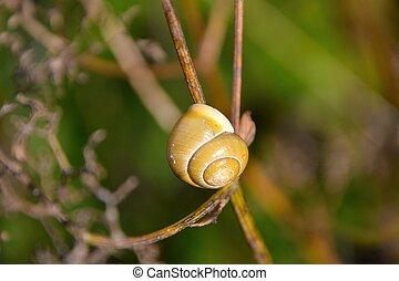 snail - Snail on a branch
