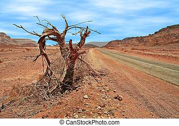 Dead tree on roadside in desert. - Old dead tree on the...