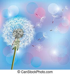 Flower dandelion on light blue - pink background, vector...