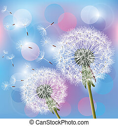 Flowers dandelions on light background - Flowers dandelions...